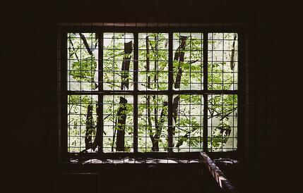 Window_Broken_Trees